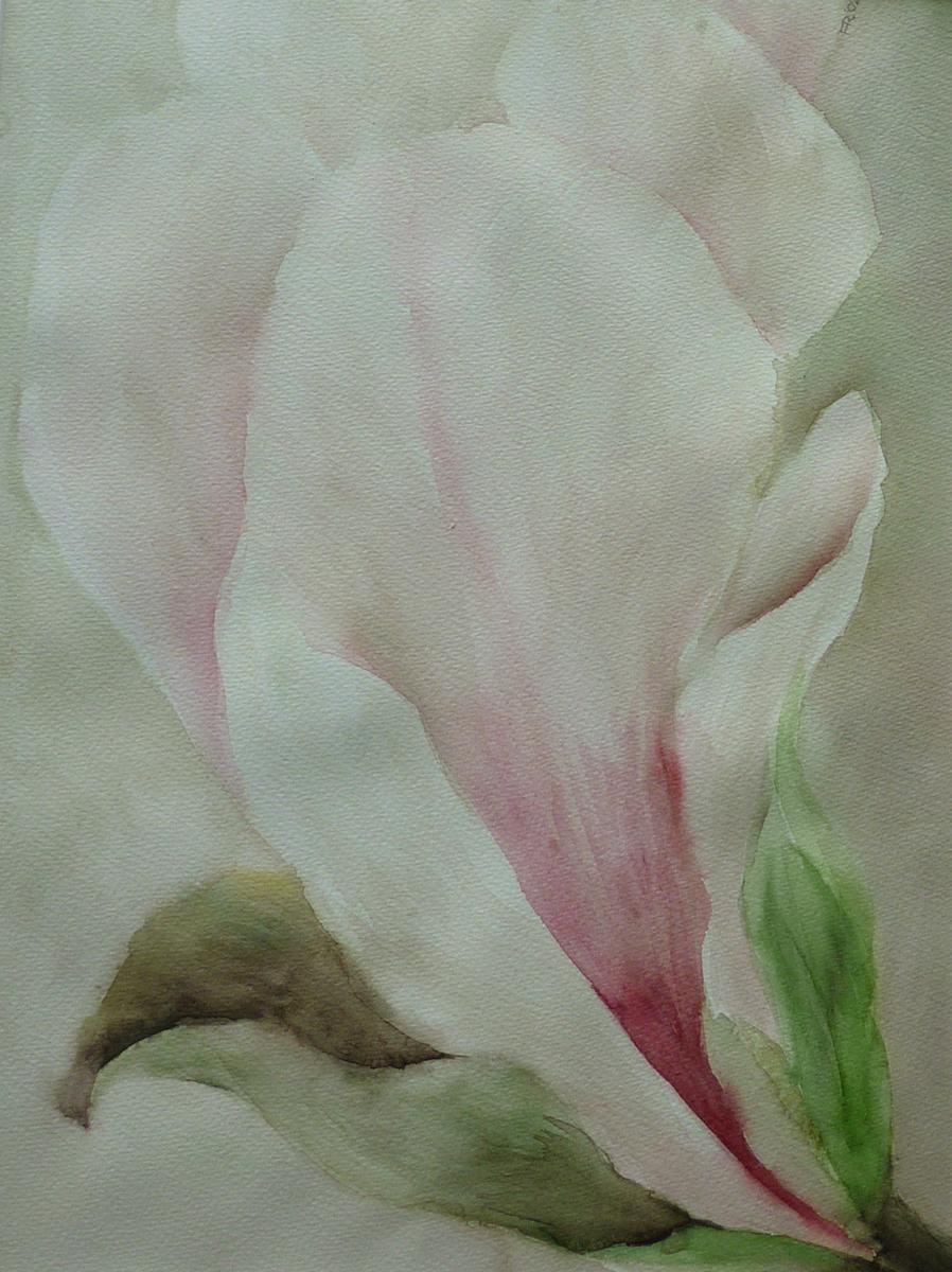 magnolia bloemen aquarellen